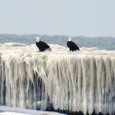 Two bald eagles perched on frozen lighthouse | Lorain, Ohio | Photo courtesy of Maureen Smith