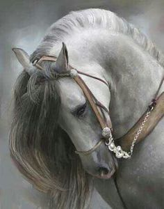 Horse!