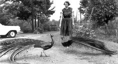 Flannery O'Connor ritratta con due pavoni del suo allevamento a Milledgeville