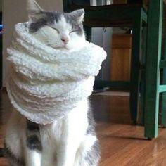 #brrr con questo #freddo e la #neve  ci voleva proprio una sciarpa calda :-)   Dolci Sogni a-mici !  #Buonanotte !   #Goodnight #Sleeptime #sleep #catsofinstagram #cats #instacat #cutecats #sweetcats #lovelovelove #lovecat #cats #pets #animals #photooftheday #ilovemycat #nature #catoftheday #lovecats   #catsmylove #Repost #gatti #dolcigatti #dolcicuccioli #ioamoglianimali #MIAO :-)