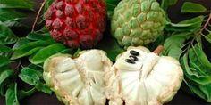 Dit Fruit soort Doodt kwaadaardige cellen van 12 verschillende soorten kanker