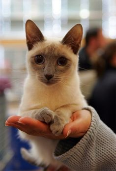 I would own a cat if it looked like this cute thing. Otherwise. No thank you.