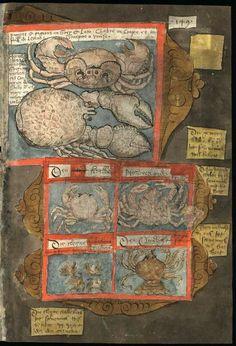 Folio 149 - Fishbook Adriaen Coenensz Adriaen Coenensz. The richness of an 16-th…