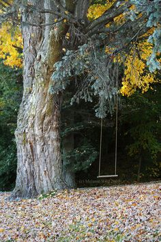 even now, i feel as though i can solve the world's problems on a tree swing...
