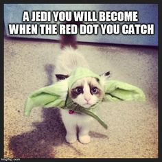 """Jedi training for cats. 
