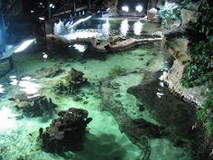 Akvarium Janov - největší v Itálii a druhé největší v Evropě. Areál je uceleným souborem nádrží s mořskými i sladkovodními rybami. Krom pohledu na život více jak 600 druhů ryb, můžete vyjet výtahem na 40 metrů vysokou vyhlídkovou věž. Techničtí nadšenci ocení námořní muzeum s 6.000 originálními exponáty mapujícími vývoj tohoto odvětví od dob antiky.