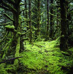 Ecola State Park, Oregon. Photography by Danielle Hughston