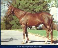 Alydar(1975)(Colt)Raise A Native- Sweet Tooth By On-And-On. 4(F)x4(F) To Bull Lea, 5(F)x5(F) To Blenheim II. 26 Starts 14 Wins 9 Seconds 1 Third. $957,195. Won Champagne S(G1), Sapling S(G1), Florida Derby(G1), Flamingo(G1), Blue Grass S(G1), Travers(G1) , Arlington Classic(G2), Whitney H(G2), Nassau County H(G3), Tremont S, Great American S, 2nd Futurity S(G1), Ky Derby(G1), Preakness S(G1), Belmont S(G1).