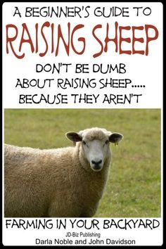Buy A Beginner's Guide to Raising Sheep: Don't Be Dumb About Raising Sheep…Because They Aren't by Darla Noble, John Davidson and Read this Book on Kobo's Free Apps. Discover Kobo's Vast Collection of Ebooks and Audiobooks Today - Over 4 Million Titles! Sheep Pen, Pet Sheep, Sheep Farm, Babydoll Sheep, I Am The Door, John Davidson, Raising Farm Animals, Sheep Shearing, Baa Baa Black Sheep