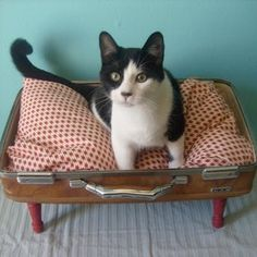 "Old suitcase, turned cat bed! This website is CHUCK full of ""Old Stuff, New Purpose"" ideas. #DIY"