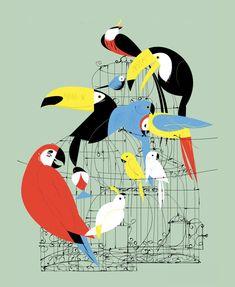 Aves Tropicales Papagayo Tucán Vintage Clayton Junior