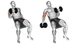 Exercise Database - Seated Alternate Incline Dumbbell Biceps Curl — Jase Stuart - The Better Body Coach Bicep Workout Routine, Back And Bicep Workout, Back And Biceps, Dumbbell Workout, Good Arm Workouts, At Home Workouts, Fitness Workouts, Best Biceps, Biceps Curl