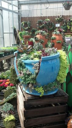 Never throw away a broken pot!  It just gives you another way to plant.  Repurpose and reuse!!