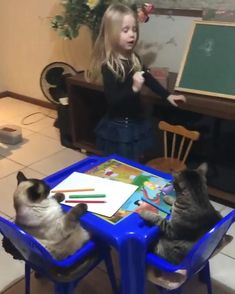 Funny Animal Memes, Funny Cat Videos, Funny Animal Pictures, Cat Memes, Cats Humor, Humorous Pictures, Funny Memes, Funny Cute Cats, Cute Funny Animals