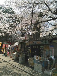 上野 昔ながらの駄菓子屋