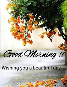 Good Morning Friends Images, Good Morning Beautiful Pictures, Good Morning Beautiful Flowers, Good Morning Nature, Good Morning Roses, Good Morning Image Quotes, Good Morning Images Flowers, Good Morning Beautiful Images, Good Morning Images Download