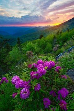 Glow On Rhododendrons In Blue Ridge Parkway is a photograph by JW Photography. This was our first stop after several hours of l… Beautiful Photos Of Nature, Nature Pictures, Amazing Nature, Beautiful Landscapes, Beautiful World, Beautiful Images, Beautiful Flowers, Mother Earth, Mother Nature