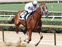 Work All Week(2009)City Zip- Danzig Matilda By Repriced. 4x5 To Raise A Native, 5x5 To Nashua. 19 Starts 13 Wins 4 Seconds 1 Third. $1,511,271. Won 2014 BC Sprint(G1). Gelding Retired In October 2015 Due To Knee Fracture.