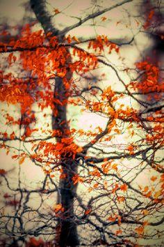 Fire in the body! by Aziz Nasuti on 500px