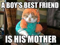 Pets get up to all kinds of weird stuff when we're not home, Super Funny Awesome Memes AdviceAnimals AdviceAnimals, funnymemes, Memes, Happy Birthday Mother, Happy Birthday Pictures, Feels Meme, Boy Best Friend, What Cat, Cat Carrier, Cat Names, Get Up, Super Funny