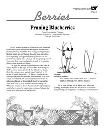 About featured flora on pinterest fig tree figs and blueberries