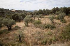 Arriba, vista parcial del olivar. En las otras dos imágenes, Loli Espinar vierte aceite en unos vasos y muestra los depósitos