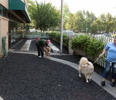 Check out our courtyard dog boarding facilities !