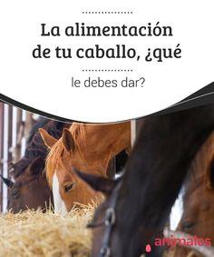 La #alimentación de tu caballo, ¿qué le debes dar?  La alimentación de tu #caballo debe ofrecer los nutrientes necesarios para que el animal pueda alcanzar su #desarrollo óptimo. Solamente así es posible conservar su #estado de salud del equino.