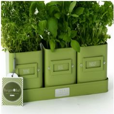 3 Lime Green Herb Pots On A Tray Burgon And Ball - Gorgeous Gifts