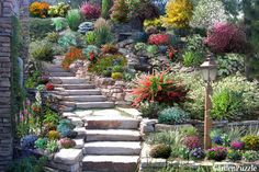 Garden design:The rockery - Spring