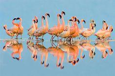 flock of flamingos - Google Search