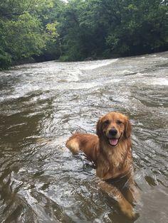Rollo loves this creek