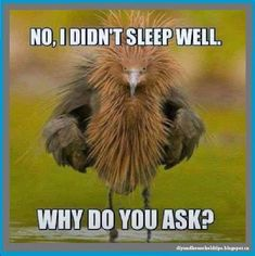 Funny o piercing de cada signo - Piercing Funny Animal Memes, Cute Funny Animals, Funny Animal Pictures, Funny Relatable Memes, Funny Cute, The Funny, Funny Jokes, Funny Pix, Laugh Out Loud