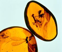 Amber Stone Meaning and Properties: The inner world of amber is truly fascinating, you can often see ancient insects trapped inside amber   possibly millions of years ago.