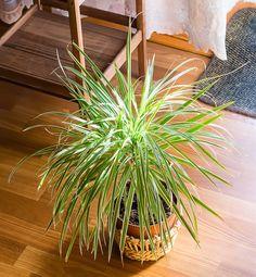 20 plantes parfaites pour salle de bain qui poussent avec peu / pas de lumière Calathea, Plantes Feng Shui, Plante Zz, Decoration Plante, Herbs, Jungles, Gardens, Plants, Tropical Plants