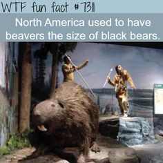 Giant beavers the size of black bears - WTF fun fact