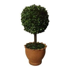 Laura Ashley by Vintage Home VHA102431 29-in Preserved Natural Boxwood Ball Topiary