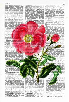 Vintage Book Print Dictionary or Encyclopedia Page Print by PRRINT
