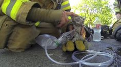 This brave firefighter always straps a camera to his helmet on the job. This time, it captured him rescuing a kitten from a burning house and reviving it. Then he edited the footage into this adorable and amazing movie trailer! #kittens