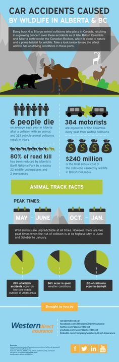 Car accidents caused ay wildlife In #Alberta and #BC - #infographics