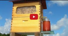 These inventors have come up with an amazing new way to retrieve honey from beehives. This technique of inserting a tube directly into the hive has honey flowing within seconds with minimal disturbance to the bees. You'll be suffering froma lot less bee stings with this new method! Without honeybees, agriculture would surely suffer. Honeybees …