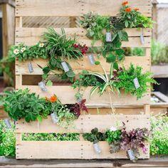 Mur végétal réalisé à partir de palettes / DIY terrrace pallets