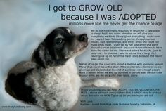 Older animals need homes too!