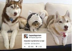 Master Thesis Advisor Supervisor Meme Dogs Inspirational - Vision specialist