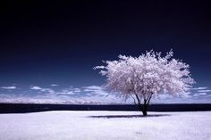 a winter summer. Infrared photography.