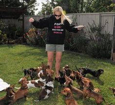 Foxy Doxy Dachshund Rescue. Looks like heaven to me!!!