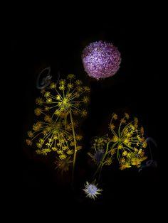 Сара Илленбергер (1976, Германия), это ее проект - Flowerwork (2014) Она многопрофильной художник в Берлине, работает на пересечении графического дизайна и фотографии.   http://tanjand.livejournal.com/1247172.html