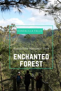 Kondalilla Falls is a lovely spot for a bushwalk in Queensland's Sunshine Coast in Australia