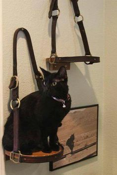 Horse halter shelf...I need these! As if my decor isn't already overwhelmingly equestrian-themed. :)