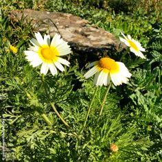 manhãs perfeitas: Spring is on / BLOG